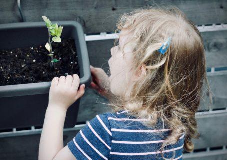 Enfant qui regarde une plante