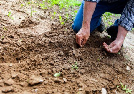 agronomie versus agroécologie - lheureduchoix
